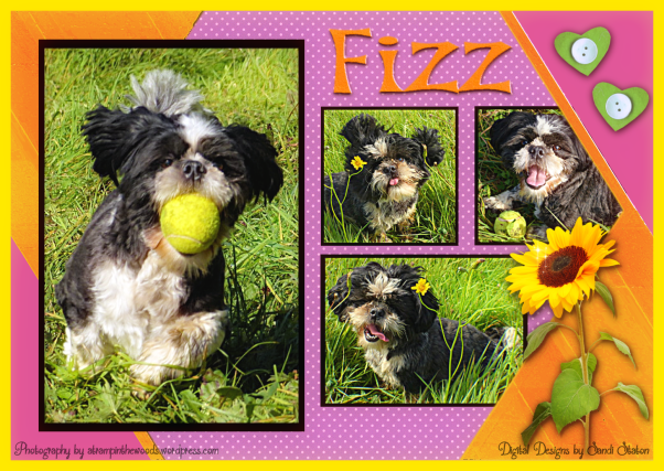 Fizz Picture Perfect