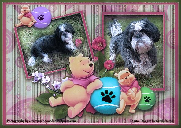Fizz and Winnie the Poo