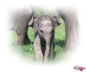PSP Elephant 10