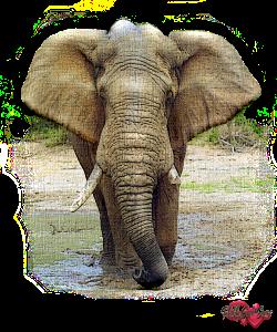 PSP Elephant 2