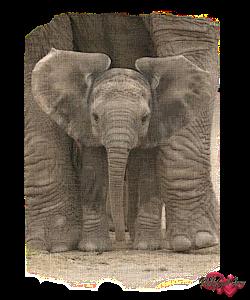 PSP Elephant 5