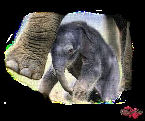 PSP Elephant 6