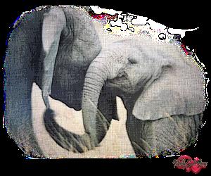 PSP Elephant 7