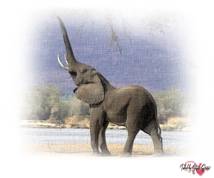 PSP Elephant 8