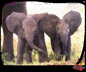 PSP Elephant 9