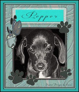 Pepper 1