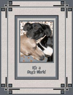 Bella and Pepper 1