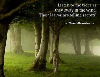 Listen-to-the-trees