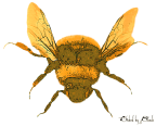 Bee13